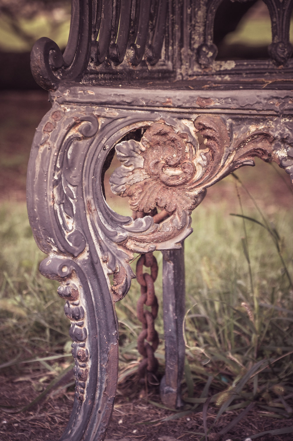 At What Price (Iron Bench on the Grounds of Hampton Plantation) Photo: Rose Anderson, 2018