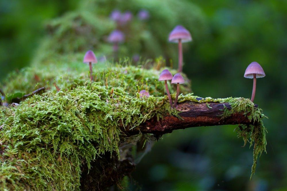 mushroom-2786789_1920.jpg