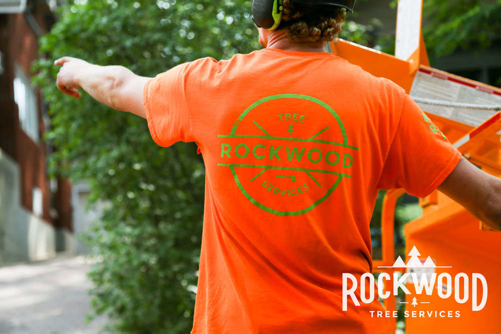 Skilled, professional, and courteous  The great Rockwood crew recently removed a huge dead ash tree from our backyard, as well as a large over-hanging branch from a neighbour's tree. The work was done quickly and the clean-up job was terrific. We would highly recommend them and will definitely hire them again in future!  - Vladimir K. 12/12/2016
