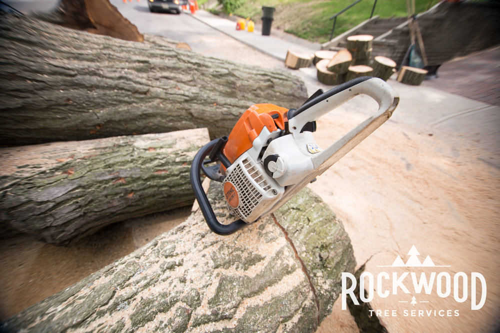 Dylan and the guys at Rockwood Tree Service did an excellent job! Highly recommended, very professional and all around a pleasure to have around.  - Robert L. 2/17/2016