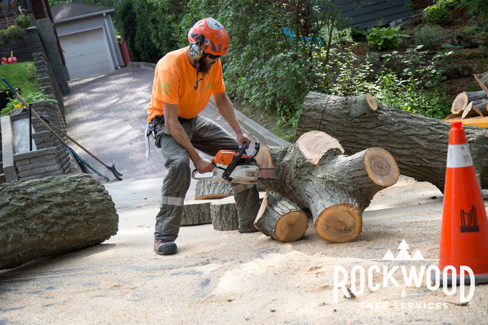 Great Service  We were very pleased with the work done by Rockwood Tree Service. Dylan was very profession and helpful and gave us a great estimate to cut down a dead tree, tidy up the old maple tree and remove overgrown bushes and shrubs. They worked very quickly and cleaned up the yard nicely before leaving. I would definitely use their service again.  - Anita D. 8/25/2015