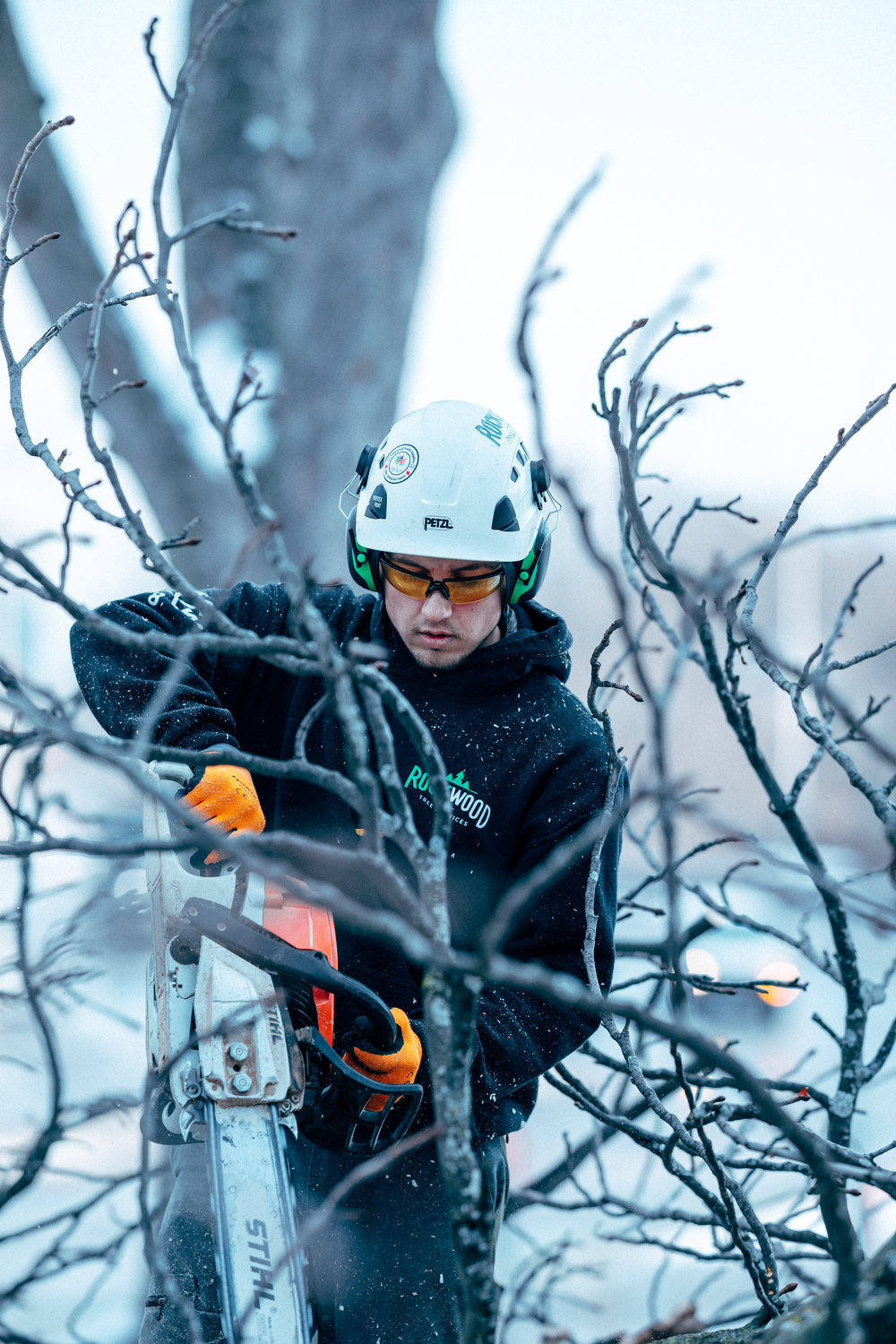 - WINTER TREE REMOVAL TORONTO