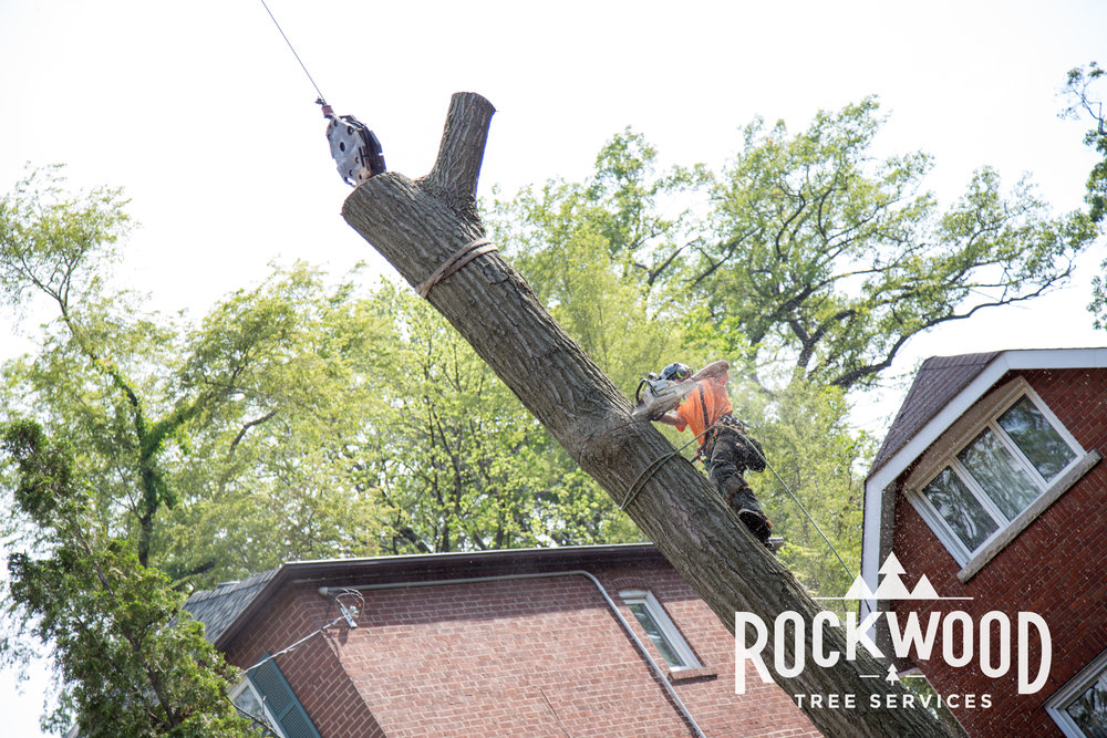 Rockwood Tree Services (27 of 351).jpg