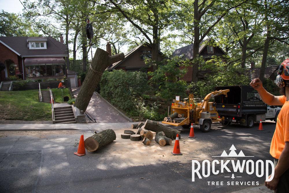 Rockwood Tree Services (39 of 351).jpg