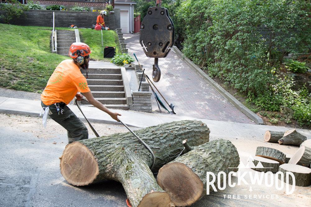 Rockwood Tree Services (56 of 351).jpg