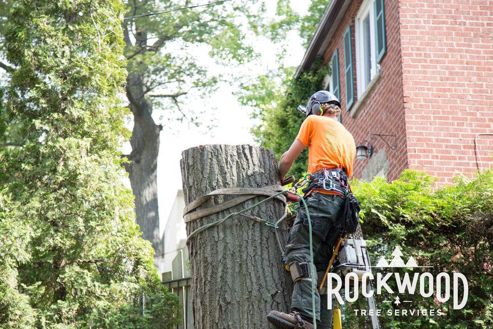 Rockwood Tree Services (63 of 351).jpg