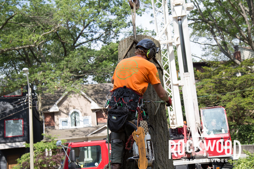 Rockwood Tree Services (78 of 351).jpg
