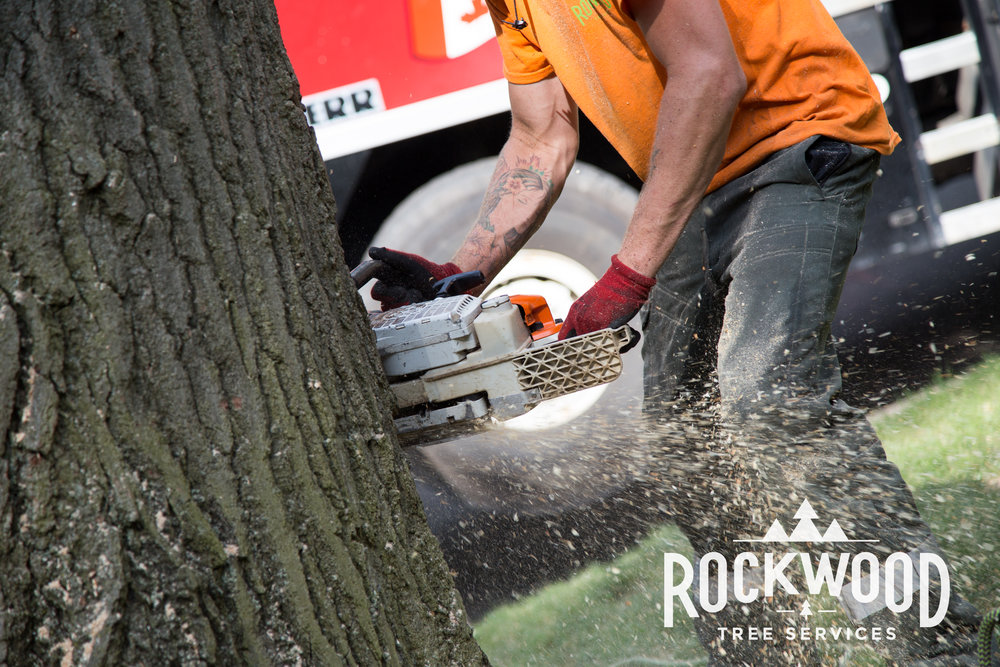 Rockwood Tree Services (97 of 351).jpg