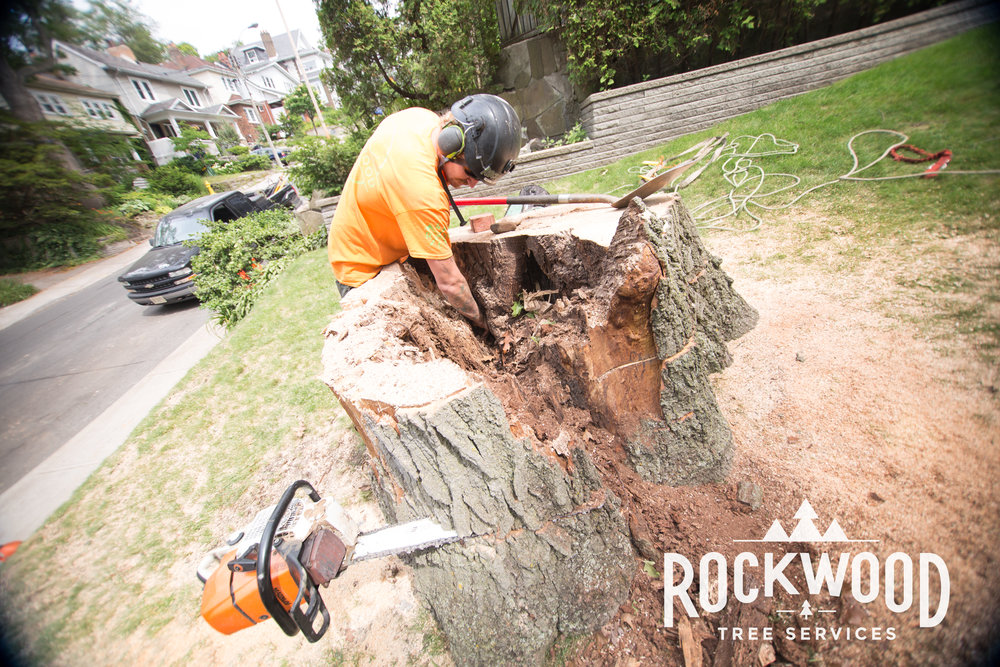 Rockwood Tree Services (274 of 351).jpg