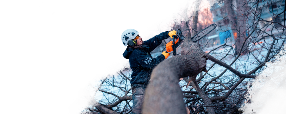 EMERGENCY RESPONSE - Fallen Trees, Damaged Limbs, Chipping & Removal