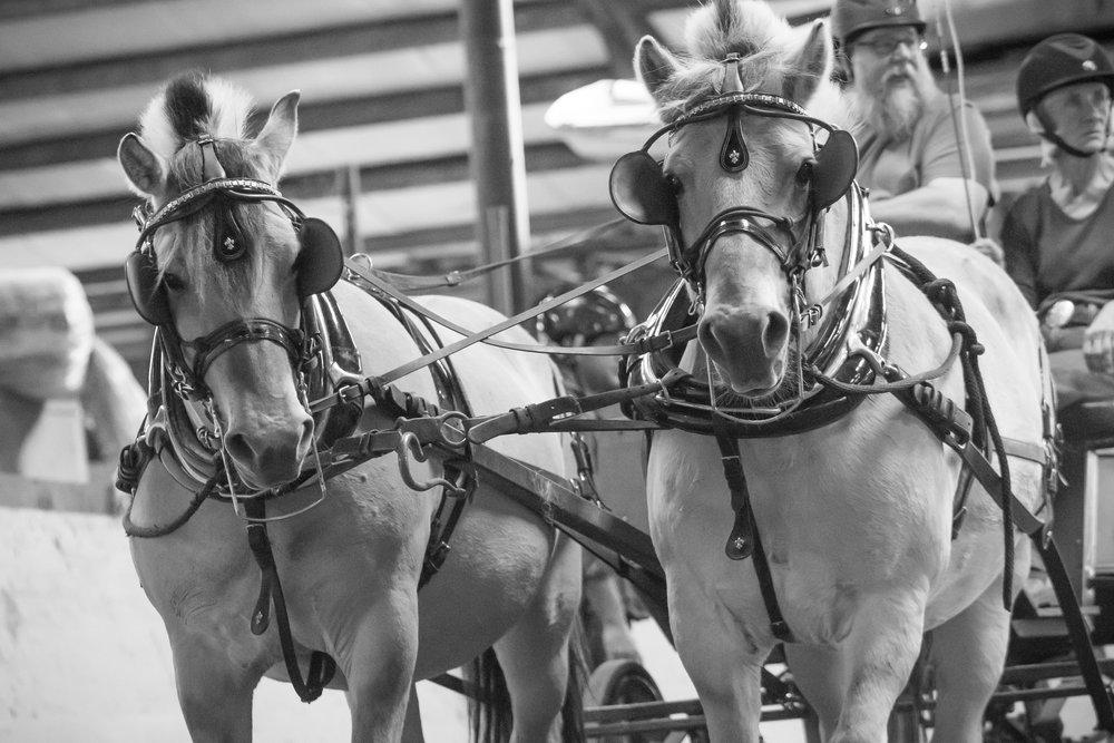 Alberta Equestrian Federation Driving Class - - August -