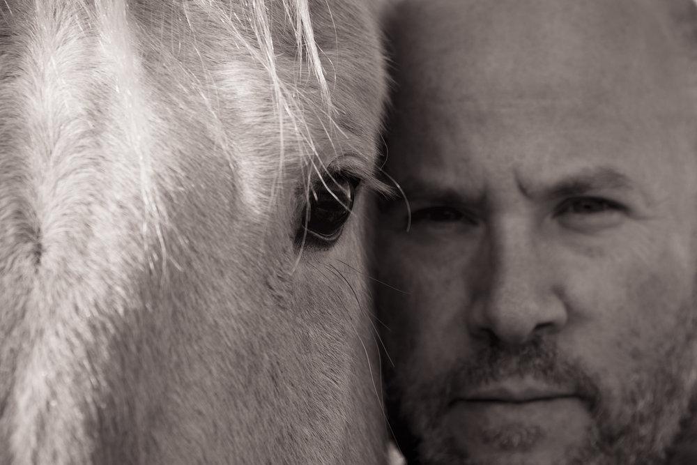 2017 Equine Portraiture -