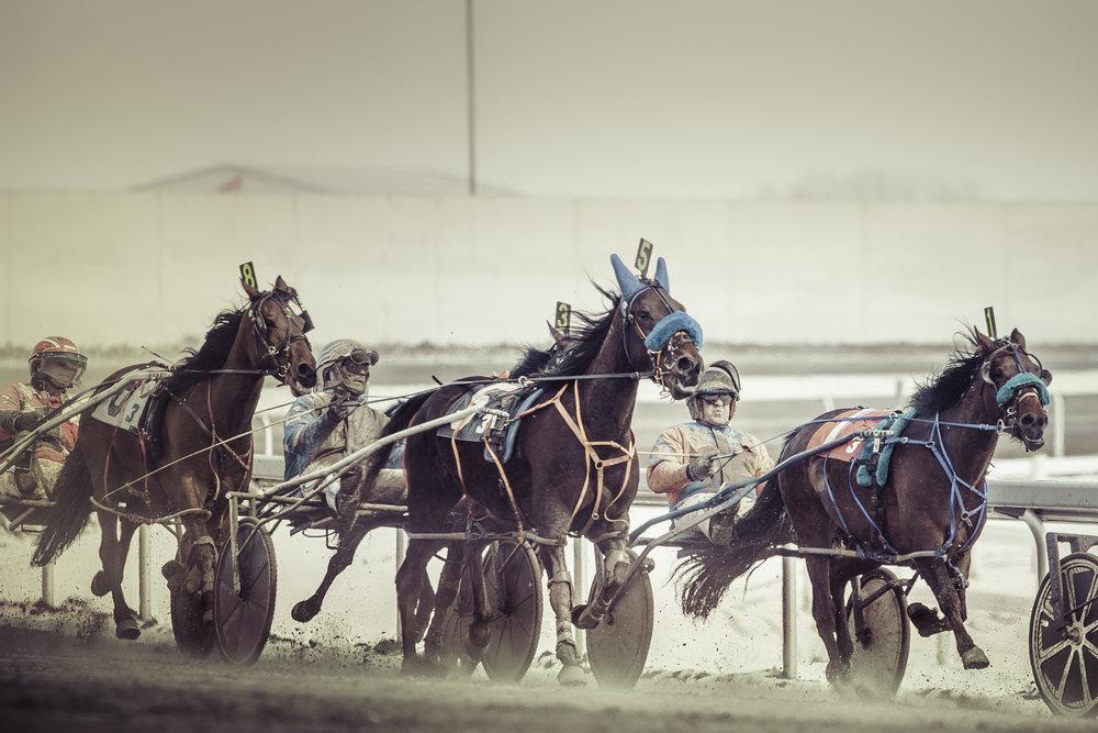 Harness Racing (1) - - April -