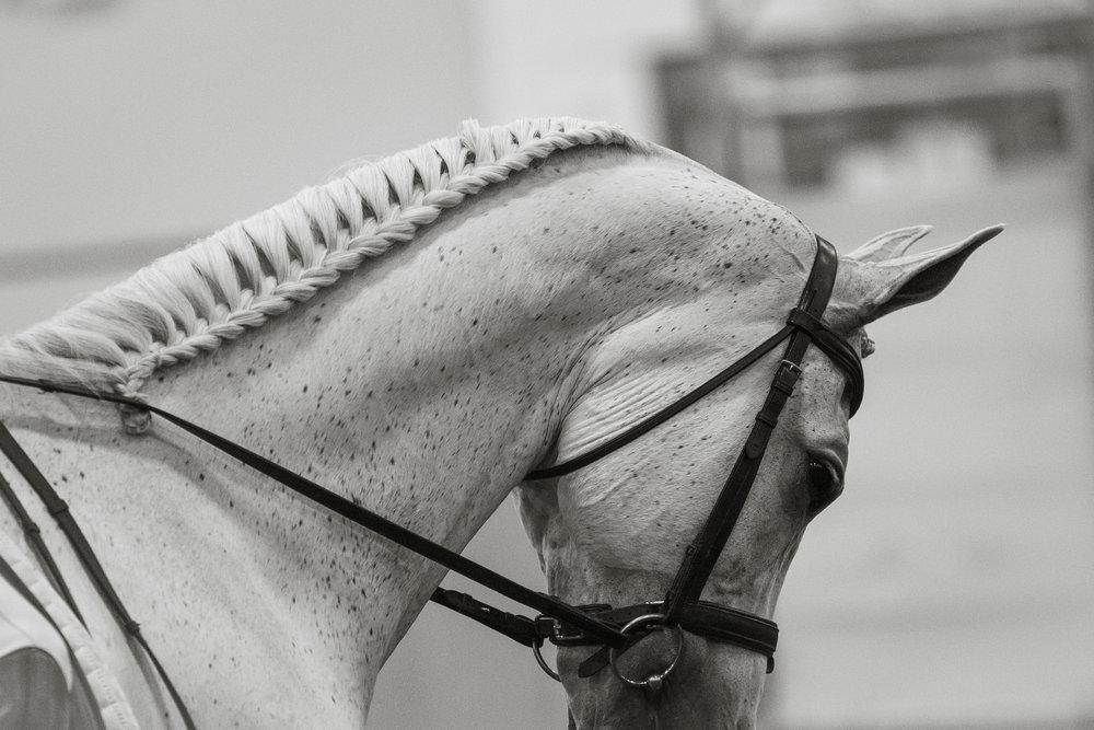 Aurora Arabian Horse Show - - June -