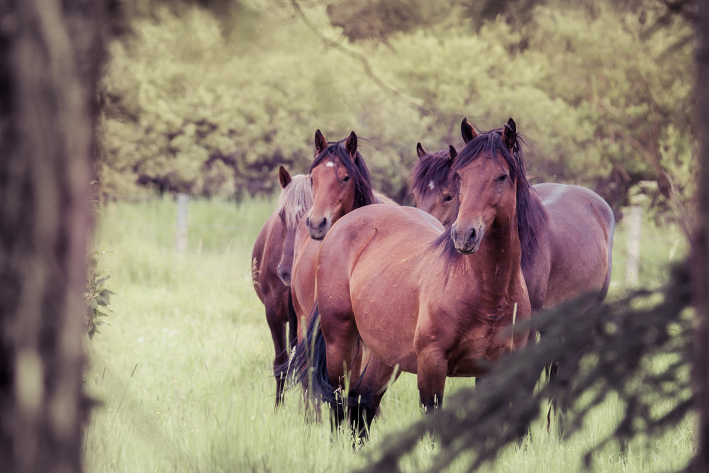 2018 Wild Horses -