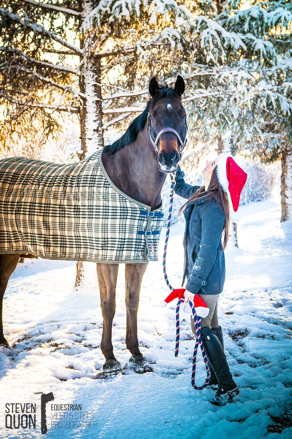 Christmas 2018 Equine Portraiture - Booking now!