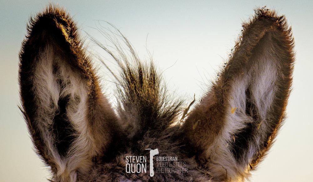 Donkey ears.jpg