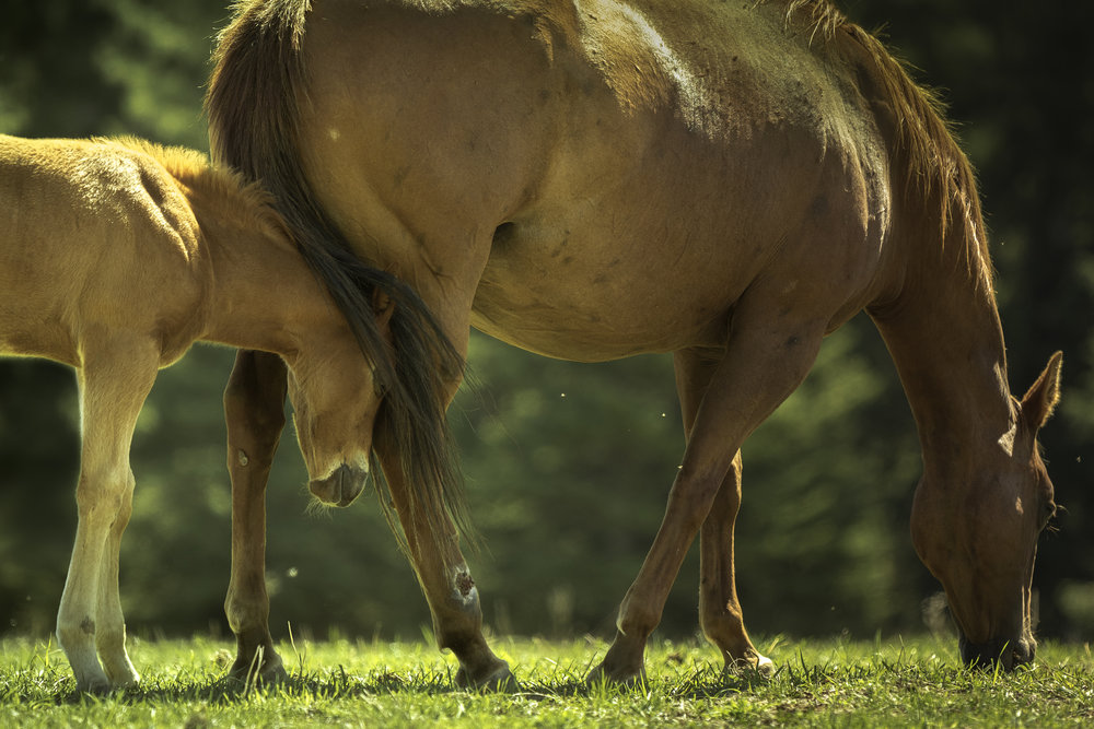 Horses Being Horses -