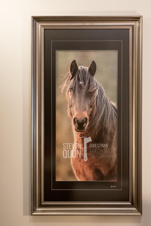 """20x40"""" Horse portrait - Exclusive size"""