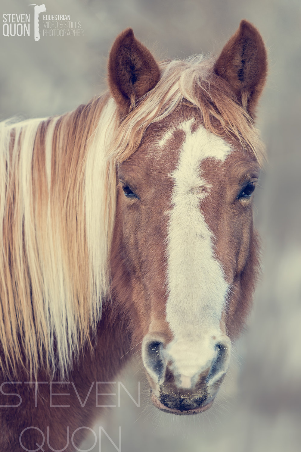 Finally a good portrait of my mare. -