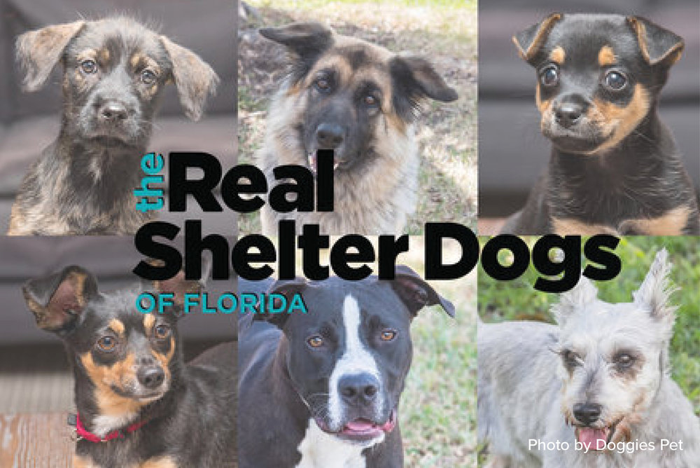 Plenty of Ways to Adopt or Foster - One of the reasons so many Miami residents are dog owners may be due to the fact there are a lot of accessible places to adopt.