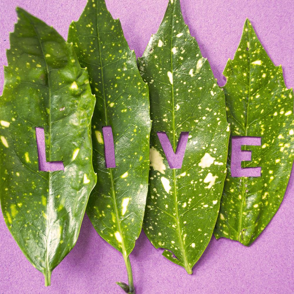 Leaf_Live.png
