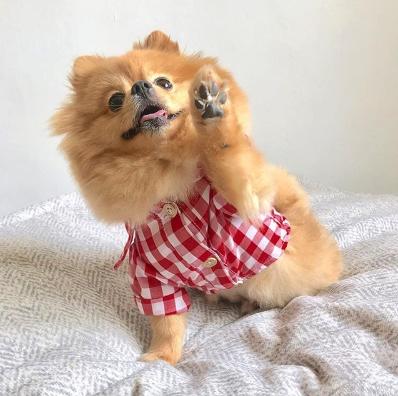 Hi I'm Chewie