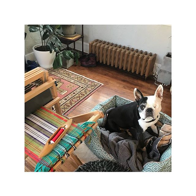 Brummel supervises production of the Sullivan tartan | loom is set up and ready to party | work in progress • • • • #zoltnerwolftextiles #handwoven #finecraft #springcollection #slowfashion #handmade #wip #studioprocess #traditionalcraft #makersmovement #americancraftsman #weaversofinstagram #customproject #silk #osullivanmaccragh #tartan #madewithlove #brummel #beaubrummel #bostonterrier #studiodog