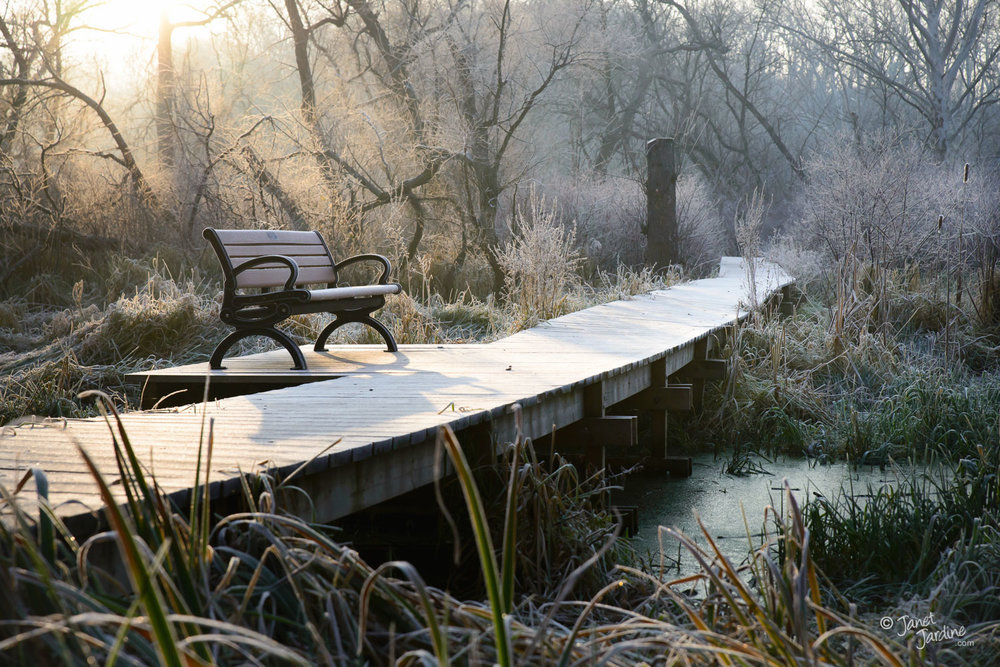 Bench-and-Boardwalk--Hendrie-Valley_Photo_copyright_Janet_Jardine.jpg