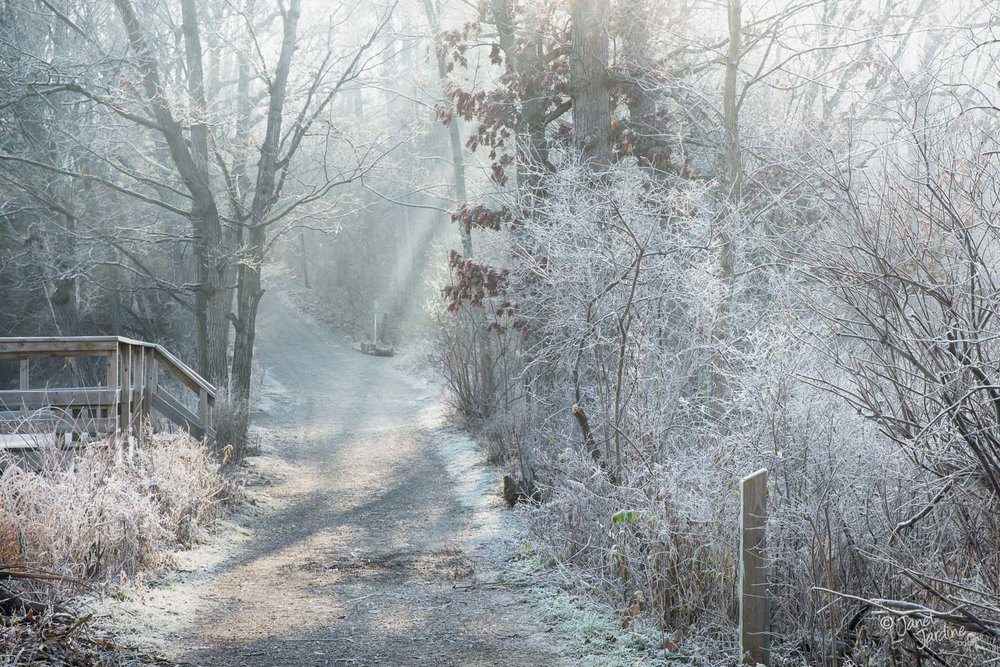 Foggy-Frosty-Morning_Photo_copyright_Janet_Jardine.jpg