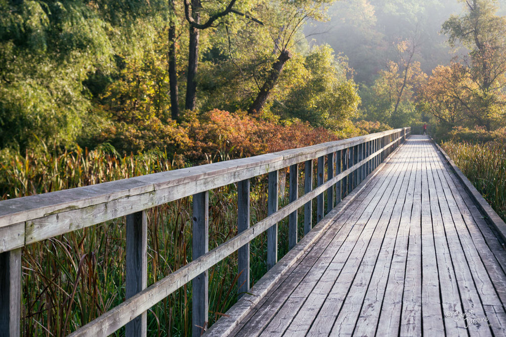 Hendrie-Valley-Boardwalk--Early-Autumn_Photo_copyright_Janet_Jardine.jpg