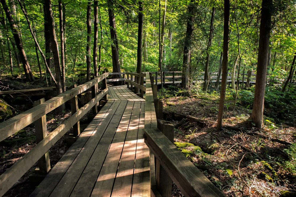 Crawford-Lake-Boardwalk_Photo_copyright_Janet_Jardine.jpg