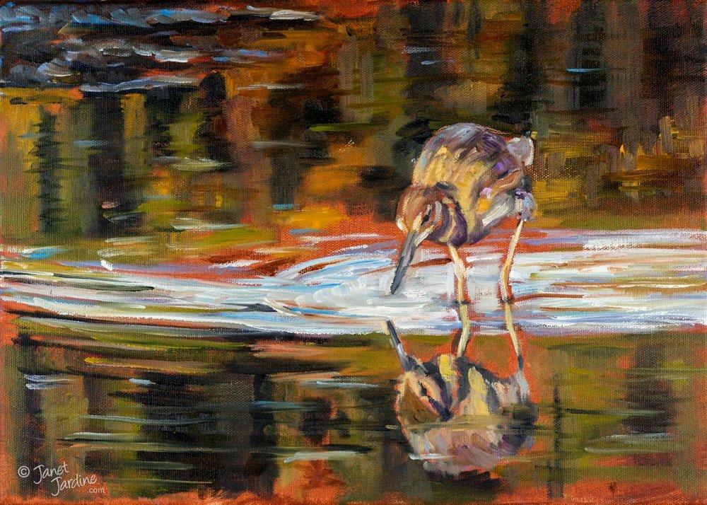 Wading Bird, PEI (Short-billed Dowitcher)