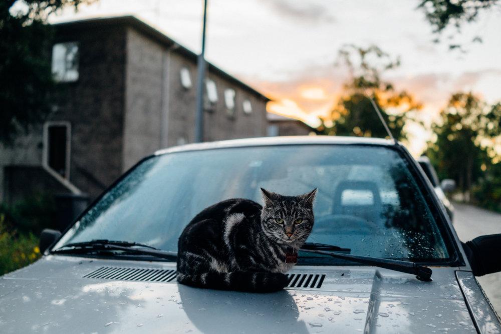 The cat of Háteigsvegur 23