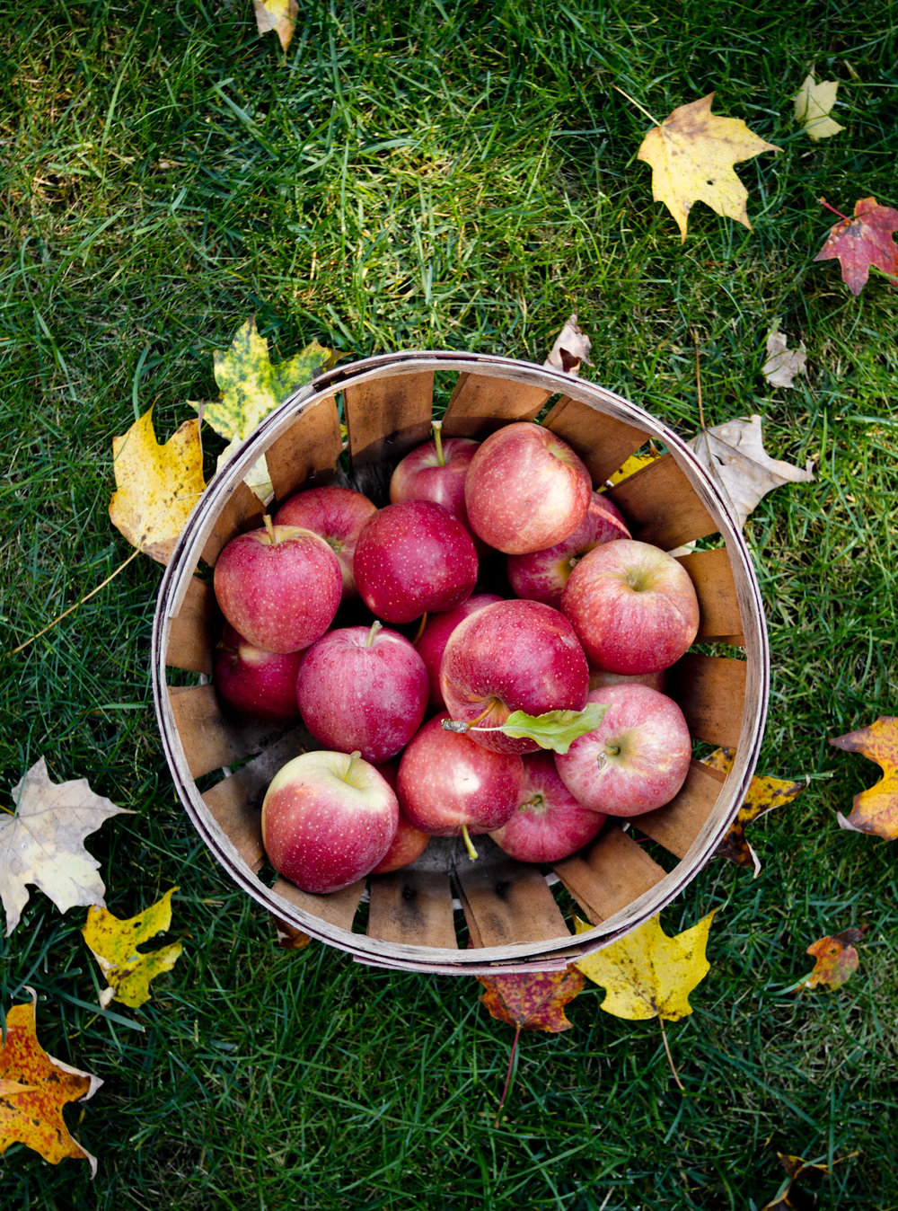 apple-picking-autumn-wood-basket-foliage.jpg