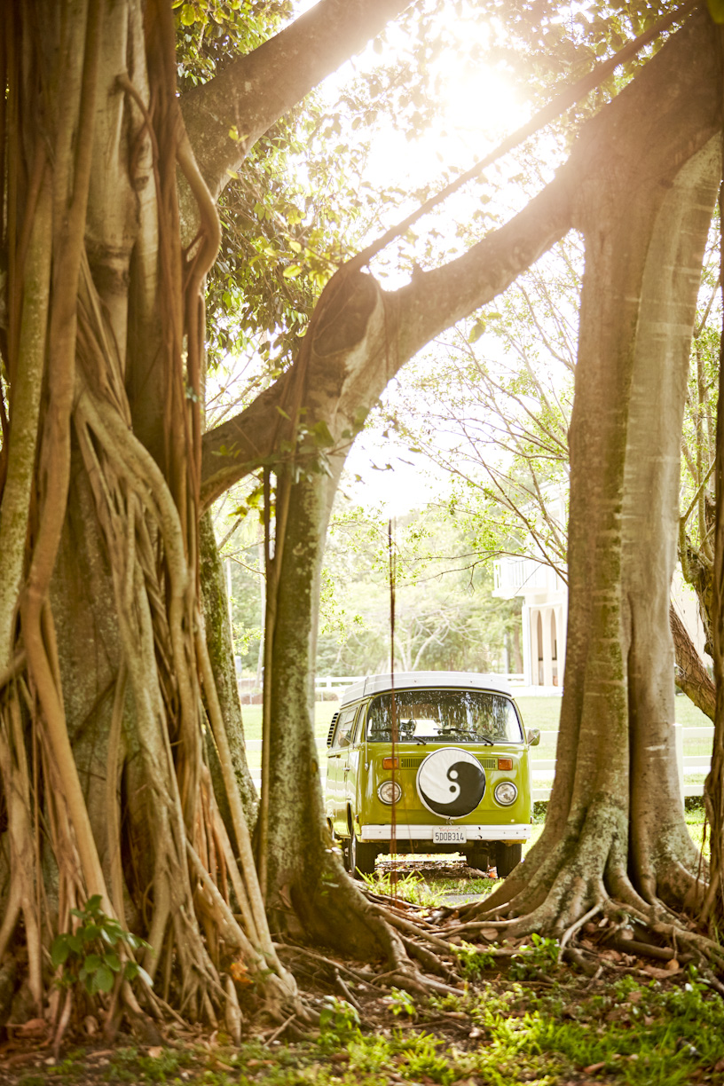 lime-green-hippie-vw-bus-banyan-tree.jpg