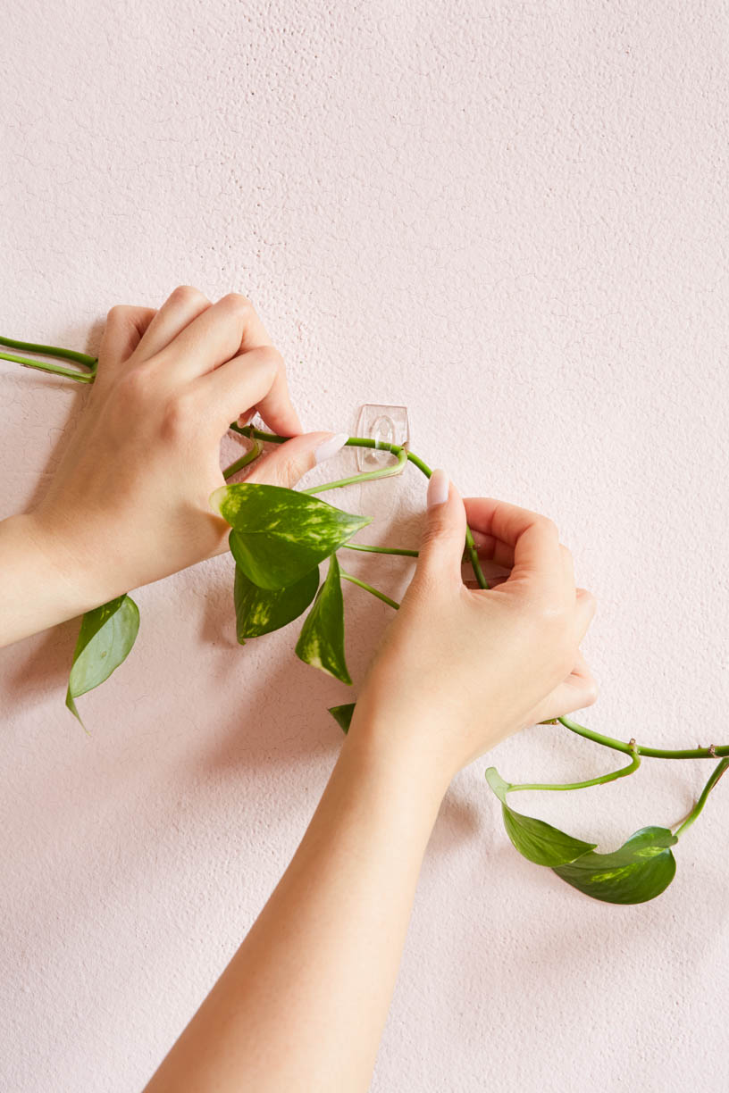 command-hook-hanging-living-greenery-wall-advertisment.jpg
