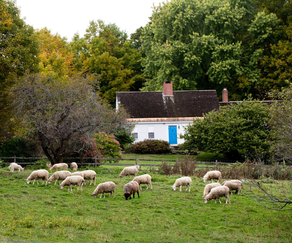 sheep-grazing-in-field-home.jpg