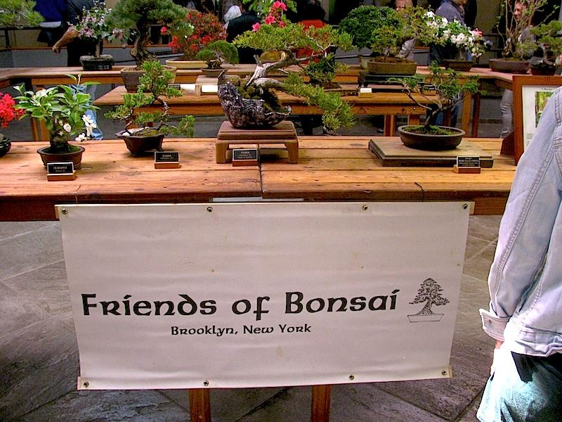 Friends of Bonsai.jpg