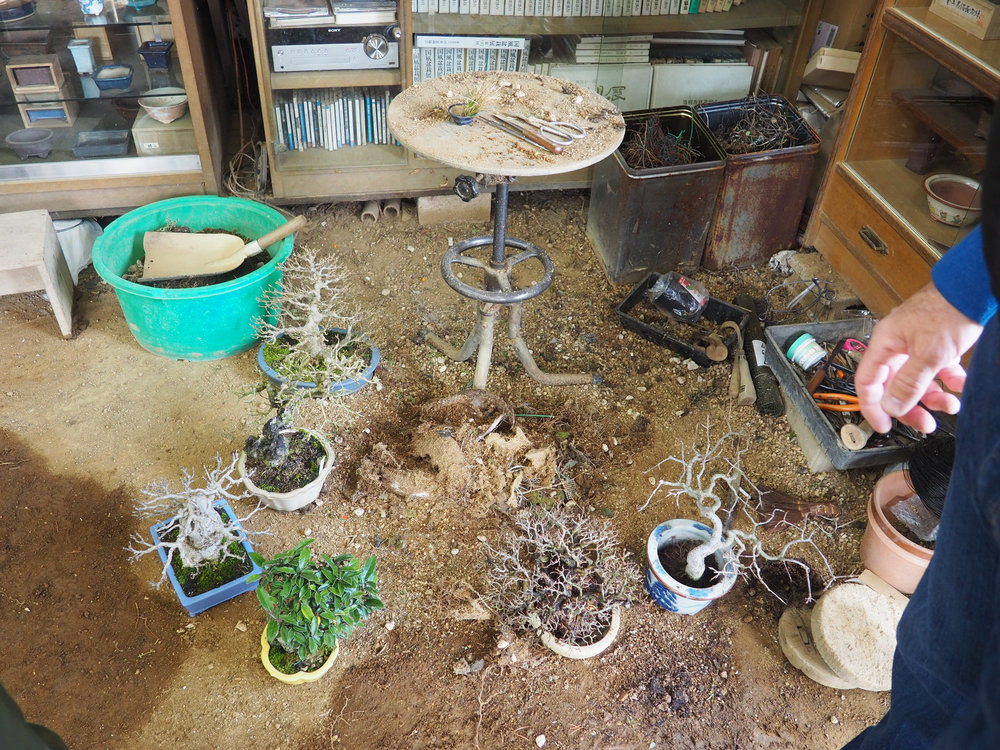 workshop bonsai II.jpg