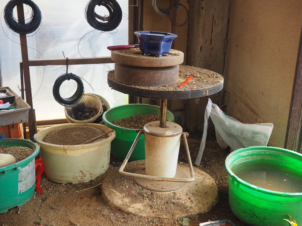 Workshop bonsai.JPG