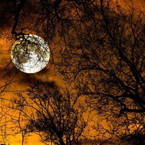 f7b5b1f9bb325e00e75ae26586121ab6--full-moon-the-moon.jpg