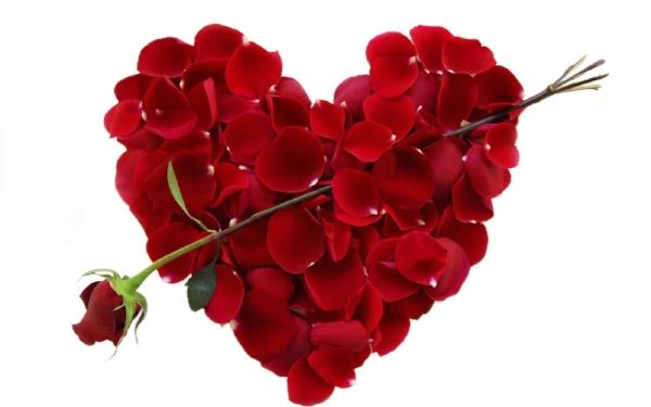 valentine-roses.jpg