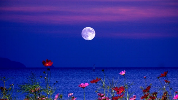 lakes-flowers-night-full-moon-lake-fullmoon-wallpaper-1920x1080.jpg