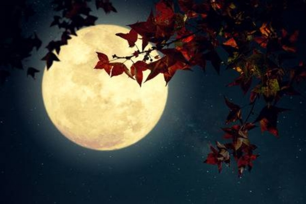 82098116-beautiful-autumn-fantasy-maple-tree-in-fall-season-and-full-moon-with-milky-way-star-in-night-skies-.jpg