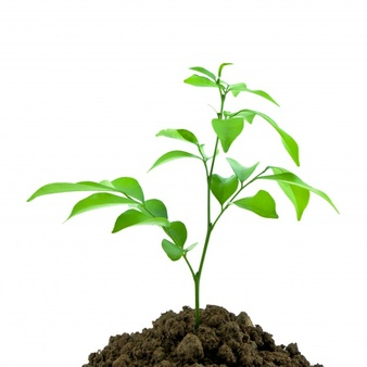 nature-sprout-dirt-young-seedling_1172-186.jpg