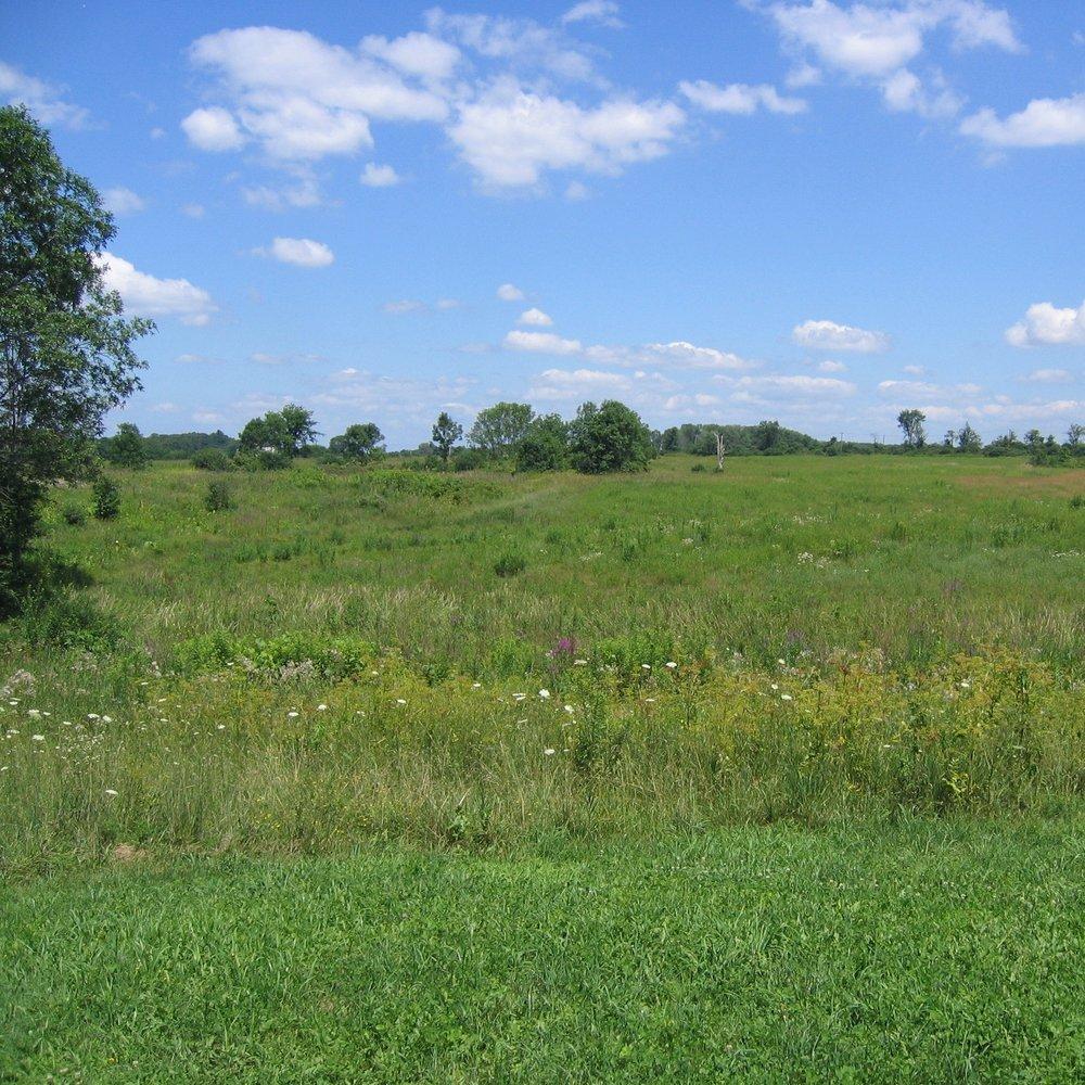 greene grassland reserve.JPG