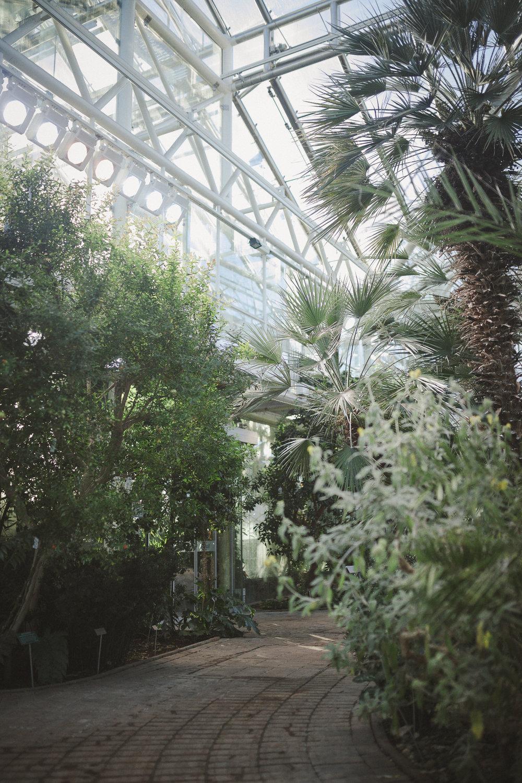 Edvard Andersons växthus Foto Emily Dahl-2.jpg