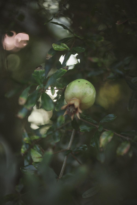 Edvard Andersons växthus Foto Emily Dahl-3.jpg