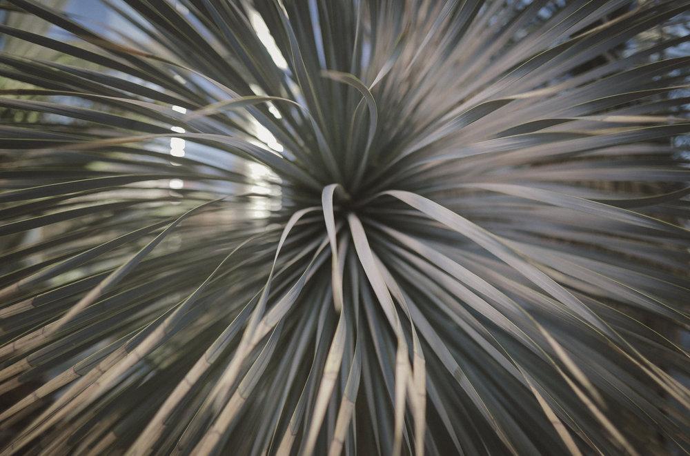 Edvard Andersons växthus Foto Emily Dahl-5.jpg